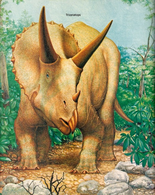 Triceratops by Peter Zallinger