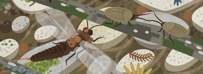 Cropped view of an illustrated creek bed in the Permian Bromacker ecosystem of Germany, featuring a paleodictyoperid insect and roachoids.