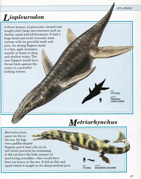 Liopleurodon and Metriorynchus by Steve Kirk