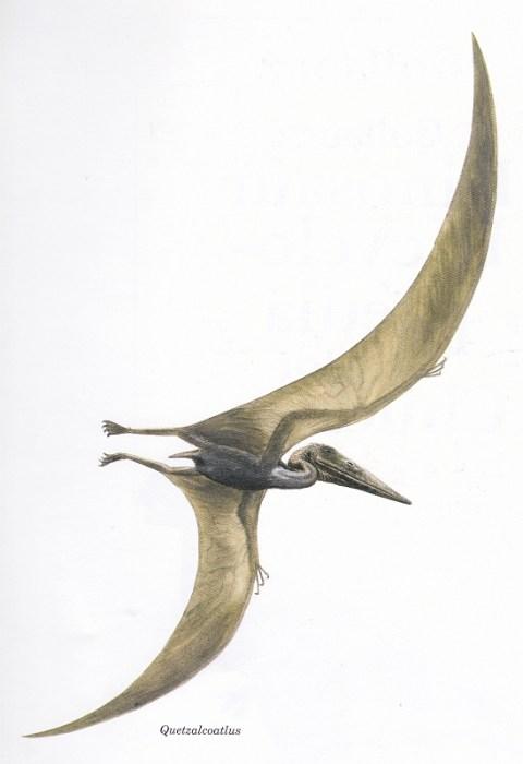 Quetzalcoatlus by Steve Kirk