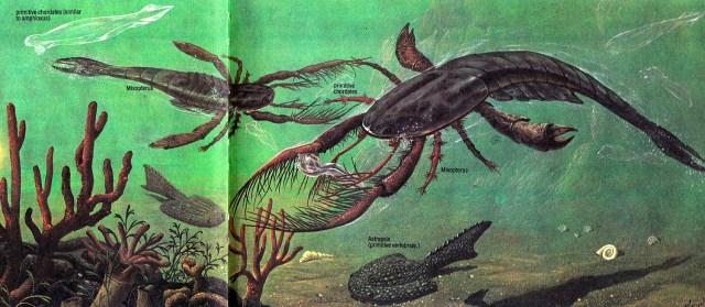 Mixopterus by P Cozzaglio