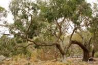 Stretching Tree Branch.