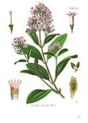 The source of quinine