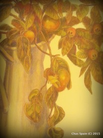 Persimmon and Medlars Detail