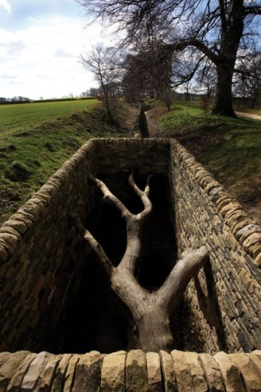 andy-goldsworthy-hanging-trees_YSP2006