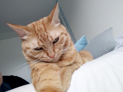 Témoignage de la famille d'adoption du chat LENA