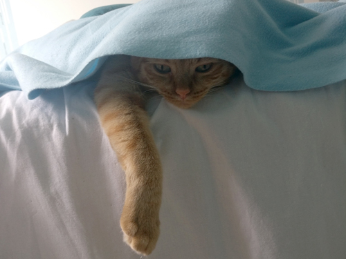 chat trop content après une adoption