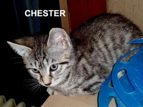 chaton a adopter paris