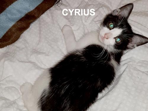 cyrius-500-03