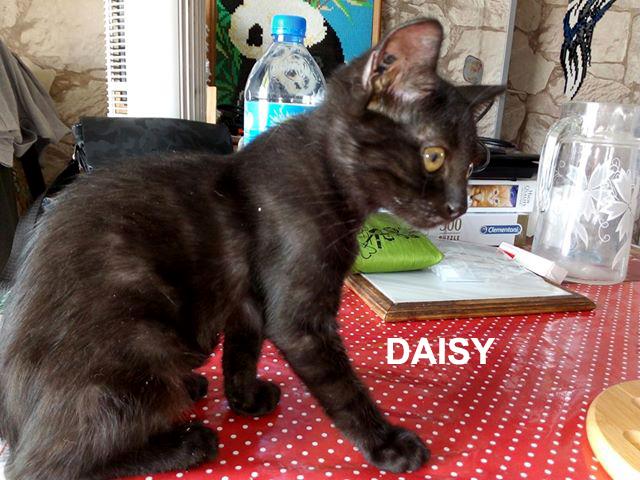 daisy-wp-carrousel-01
