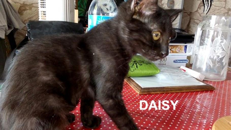 Fratrie 4 chatons à l'adoption
