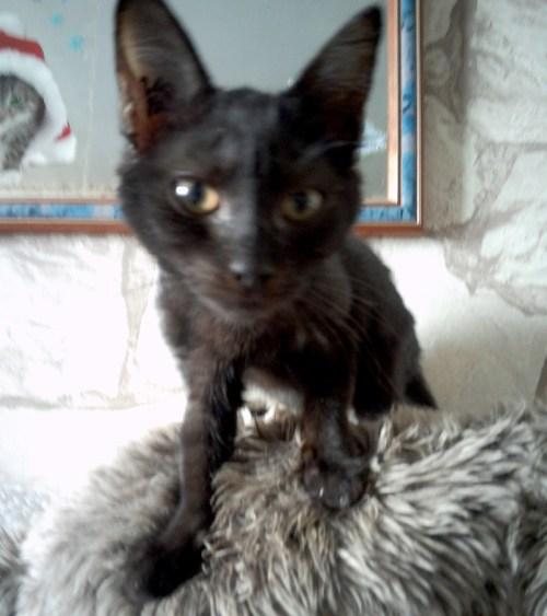 chaton noir 3 mois diego