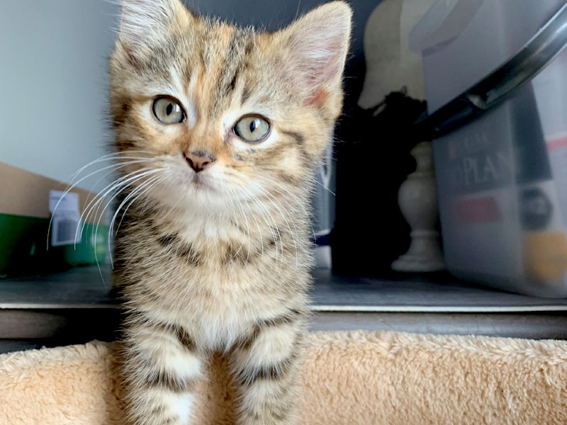 FRATRIE-CHATONS-PEARL-04