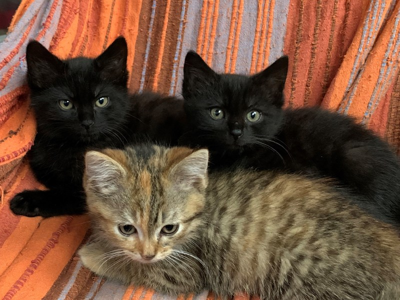 FRATRIE-CHATONS-PEARL-adoption