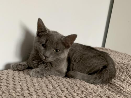 Pistache-chaton-gris-01