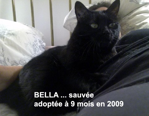 BELLA-2019-05