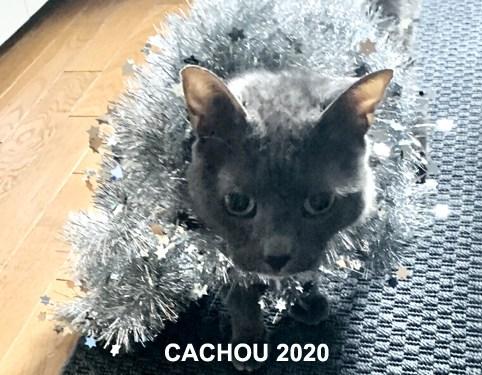 CACHOU-03