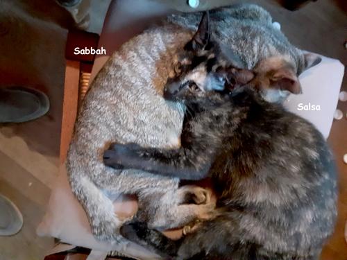 Salsa-sabbah-05