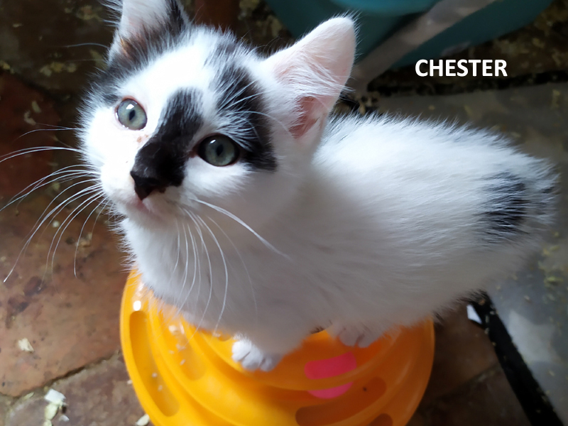 CHESTER-01
