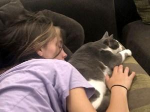Amour des chats en démonstration