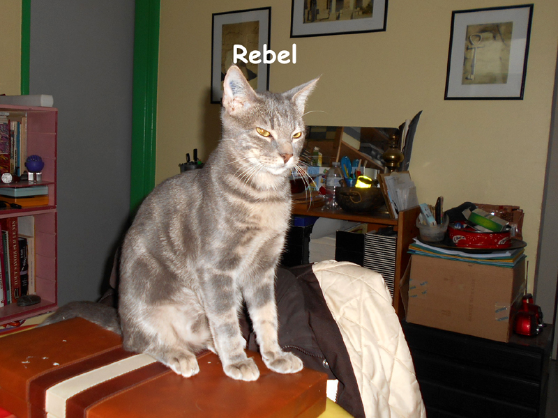 REBEL-CHATON-02