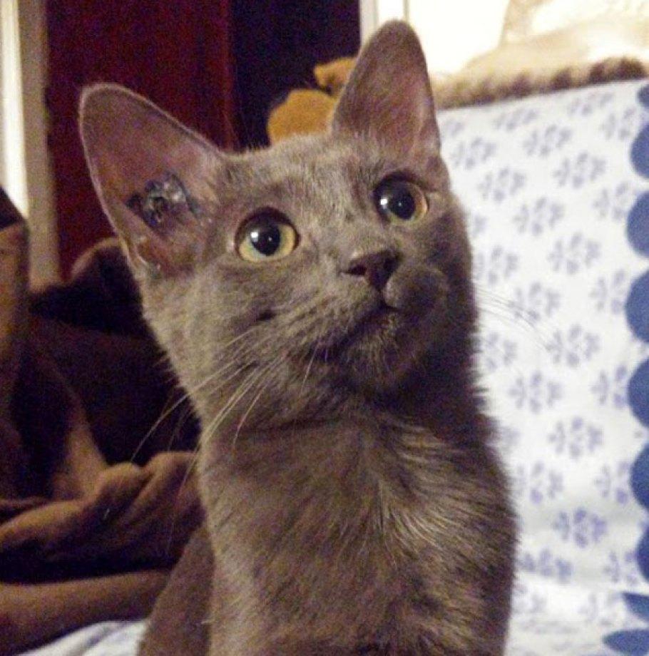 Adoption en cours pour Chaton BRISE… Qui a eu beaucoup de succès !