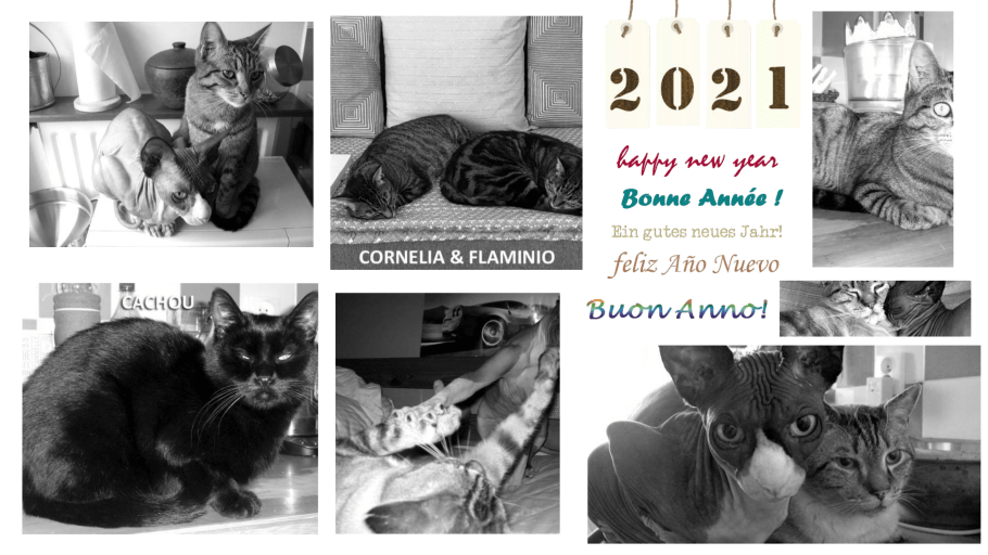 nos chats et chatons adoptés