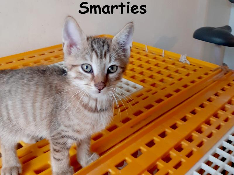 SMARTIES-01