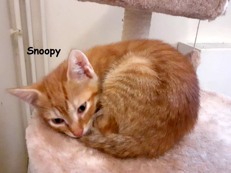 SNOOPY-02
