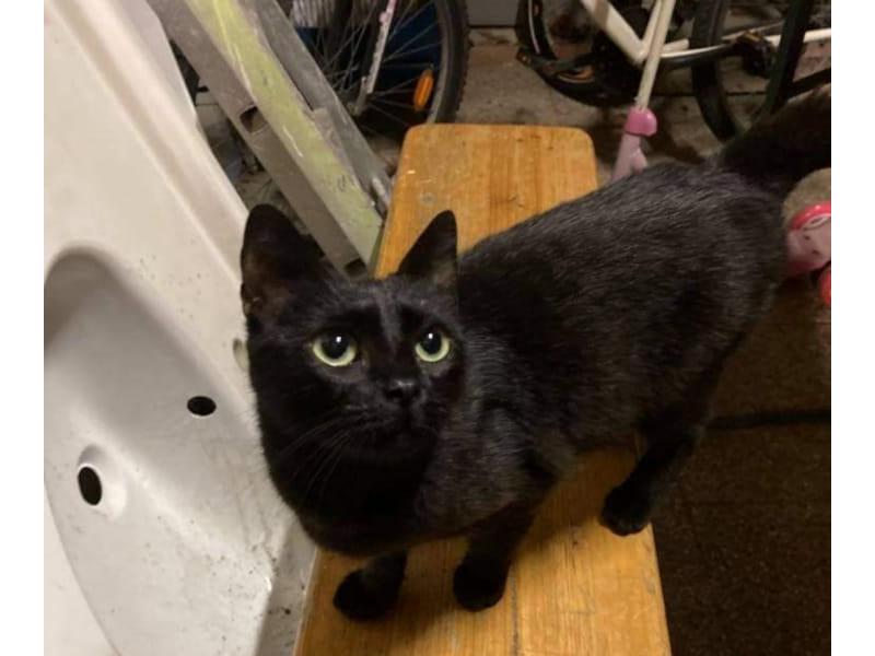 LUNA-chaton-noire-a-adopter-paris