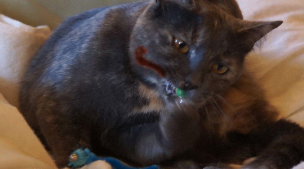 Ciccic, chat jouant avec un Vermi'son vue 3 - création de Georgia