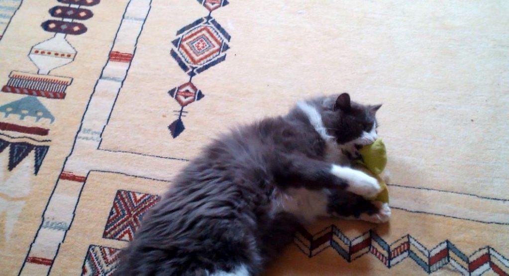 Phéliz, le chat, en train de têter un petit coussin vue 8 - création de Georgia
