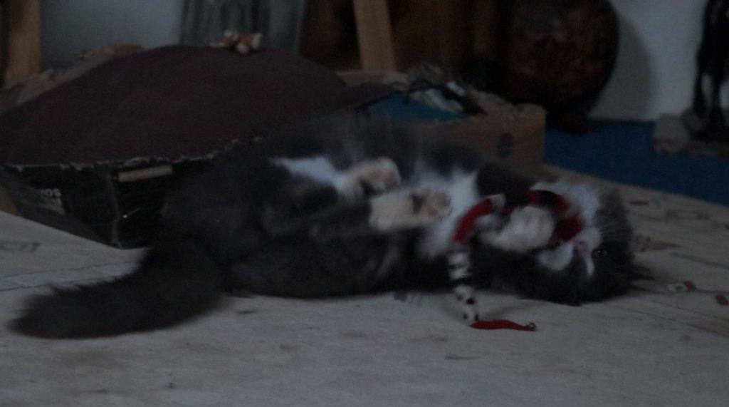 Phéliz, un chat, en train de jouer avec un Serpento, vue 4, jouet créé par Georgia