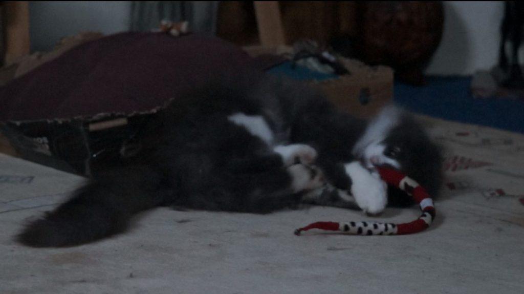 Phéliz, un chat, en train de jouer avec un Serpento, vue 3, jouet créé par Georgia