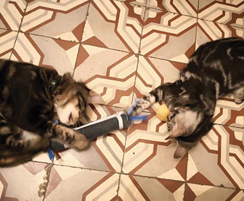 Deux chatons jouant avec Bâtoncadeau, créé par Georgia