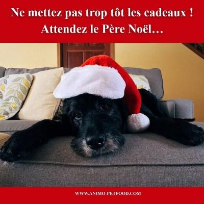 chien noir avec un bonnet de Noël