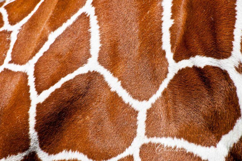 Giraffe patterns