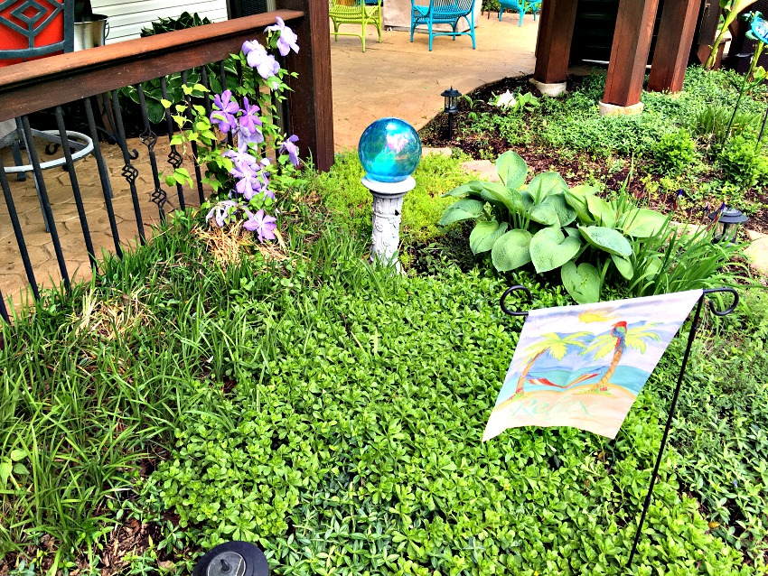 Garden Tour Clematis at www.chathamhillonthelake.com