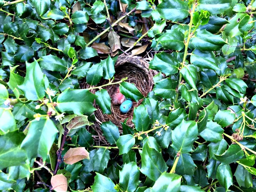 Garden Tour Hatching Eggs www.chathamhillonthelake.com