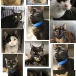 Chatham Cats