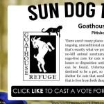 Sun Dog 130