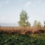 agricultural fields and trees in countryside