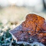 dried leaf cover by snow at daytime