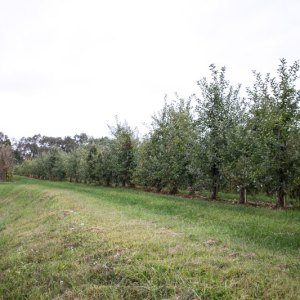 There's no better way to have Fall break fun for a day than apple picking at Mercier Orchards and being a tourist in Blue Ridge, Georgia! | chattavore.com