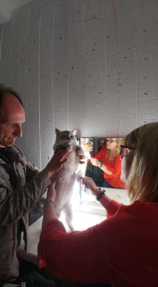 casting shooting photo chaton chat ragdoll chatterie la perle des anges ragdoll normandie caen calvados 16