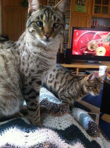 Unverkäuflich: Fredi hat sich den Rang einer Familienkatze erarbeitet.