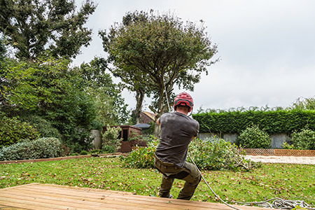 abattage d'un arbre
