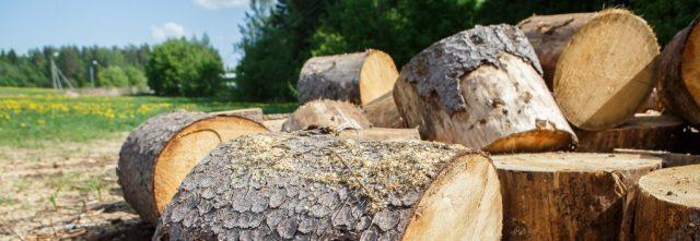 évacuation du bois suite à un abattage