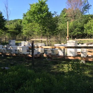 Northern Honey Bees, Queens, and Beekeeper Classes