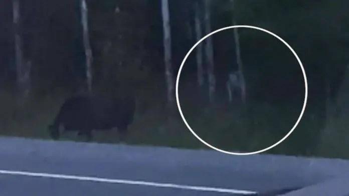 Uma misteriosa criatura humanoide foi filmada